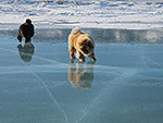 Chow-chow on Baikal Lake